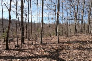 Unrestricted Woodland Acreage near Edneyville - Henderson County NC