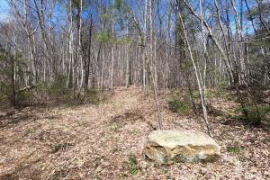 Near SW corner of property and creek, Unrestricted Woodland Acreage near Edneyville (13 of 18)