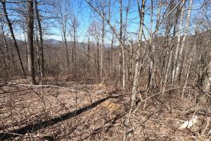 Woodlands and Long range views, Unrestricted Woodland Acreage near Edneyville (18 of 18)
