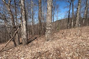 Near corner on Homers Ln, Unrestricted Woodland Acreage near Edneyville (15 of 18)