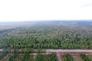 Hunting Property Ready to Build in Bladen, NC (11 of 11)