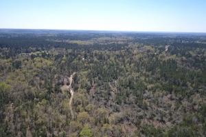 50 acre Hunting Paradise - Polk County TX