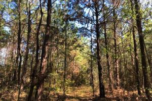 Nub Road 40 acres - Amite County MS