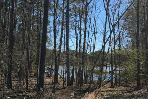 Lake Wateree Development Tract with Two Docks in Kershaw, SC (13 of 38)