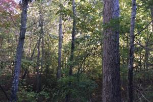 Sutton Branch Recreational Land in Kershaw, SC (9 of 10)