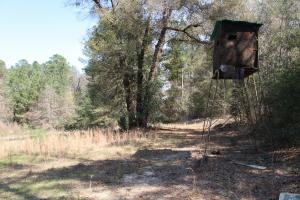 Brier Creek Hunting Tract in Jefferson, GA (31 of 82)