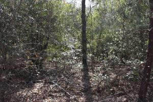 Brier Creek Hunting Tract in Jefferson, GA (68 of 82)