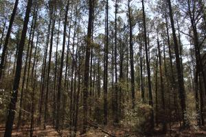 Brier Creek Hunting Tract in Jefferson, GA (64 of 82)