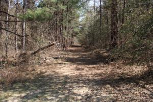 Brier Creek Hunting Tract in Jefferson, GA (15 of 82)