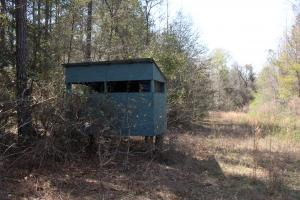 Brier Creek Hunting Tract in Jefferson, GA (60 of 82)