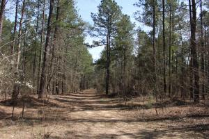 Brier Creek Hunting Tract in Jefferson, GA (40 of 82)