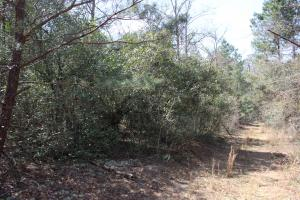 Brier Creek Hunting Tract in Jefferson, GA (14 of 82)
