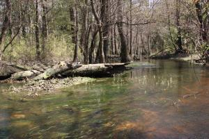 Brier Creek Hunting Tract in Jefferson, GA (4 of 82)