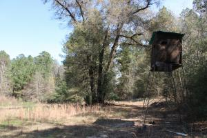 Brier Creek Hunting Tract in Jefferson, GA (7 of 82)