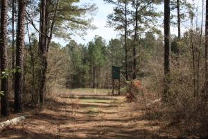 Brier Creek Hunting Tract in Jefferson, GA (37 of 82)
