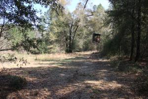 Brier Creek Hunting Tract in Jefferson, GA (13 of 82)