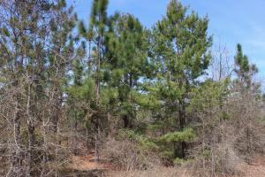 Brier Creek Hunting Tract in Jefferson, GA (82 of 82)