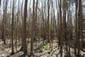 Brier Creek Hunting Tract in Jefferson, GA (30 of 82)