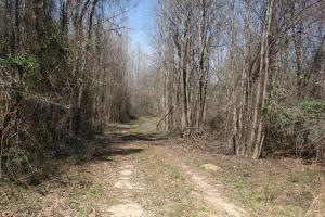 Brier Creek Hunting Tract in Jefferson, GA (34 of 82)