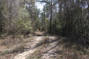 Brier Creek Hunting Tract in Jefferson, GA (73 of 82)