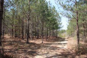 Brier Creek Hunting Tract in Jefferson, GA (48 of 82)