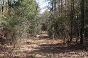 Brier Creek Hunting Tract in Jefferson, GA (43 of 82)