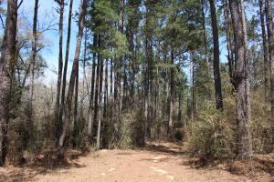Brier Creek Hunting Tract in Jefferson, GA (44 of 82)