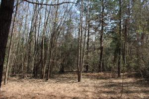 Brier Creek Hunting Tract in Jefferson, GA (39 of 82)
