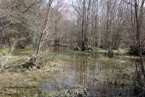 Brier Creek Hunting Tract in Jefferson, GA (18 of 82)