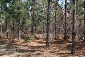 Brier Creek Hunting Tract in Jefferson, GA (78 of 82)