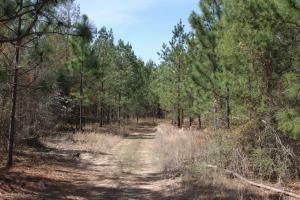 Brier Creek Hunting Tract in Jefferson, GA (63 of 82)