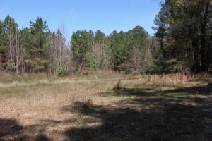 Brier Creek Hunting Tract in Jefferson, GA (11 of 82)