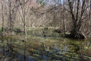 Brier Creek Hunting Tract in Jefferson, GA (24 of 82)