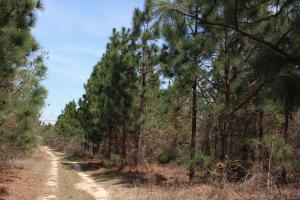 Brier Creek Hunting Tract in Jefferson, GA (72 of 82)