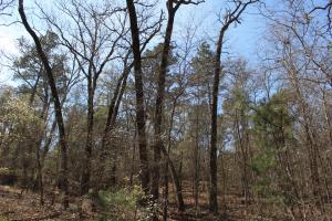 Brier Creek Hunting Tract in Jefferson, GA (19 of 82)