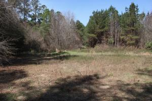 Brier Creek Hunting Tract in Jefferson, GA (9 of 82)