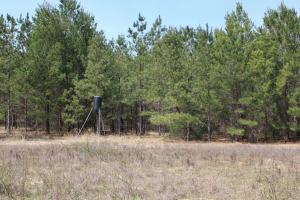 Brier Creek Hunting Tract in Jefferson, GA (55 of 82)