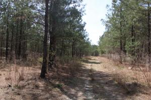 Brier Creek Hunting Tract in Jefferson, GA (56 of 82)