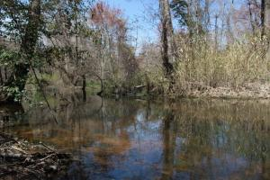 Brier Creek Hunting Tract in Jefferson, GA (20 of 82)