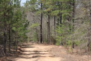 Brier Creek Hunting Tract in Jefferson, GA (45 of 82)