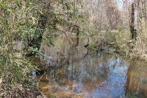 Brier Creek Hunting Tract in Jefferson, GA (22 of 82)