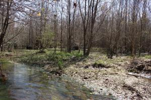 Brier Creek Hunting Tract in Jefferson, GA (36 of 82)