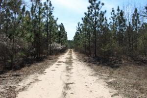 Brier Creek Hunting Tract in Jefferson, GA (2 of 82)