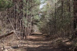 Brier Creek Hunting Tract in Jefferson, GA (32 of 82)