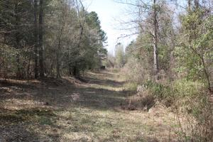 Brier Creek Hunting Tract in Jefferson, GA (41 of 82)