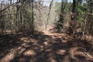 Brier Creek Hunting Tract in Jefferson, GA (35 of 82)