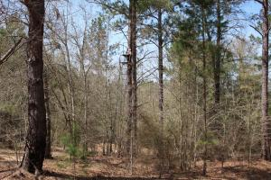 Brier Creek Hunting Tract in Jefferson, GA (53 of 82)