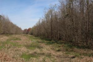 Brier Creek Hunting Tract in Jefferson, GA (25 of 82)