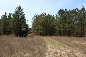 Brier Creek Hunting Tract in Jefferson, GA (57 of 82)