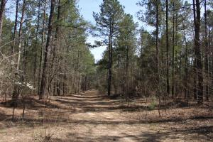 Brier Creek Hunting Tract in Jefferson, GA (42 of 82)
